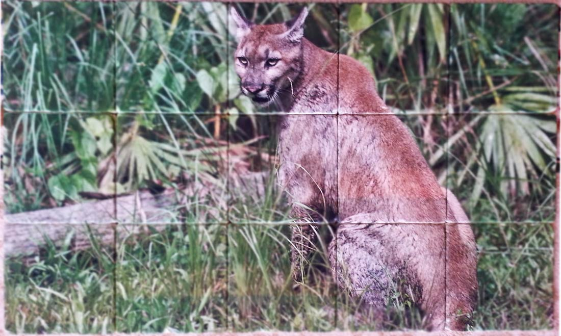 Florida Panther Photo Tile Mural