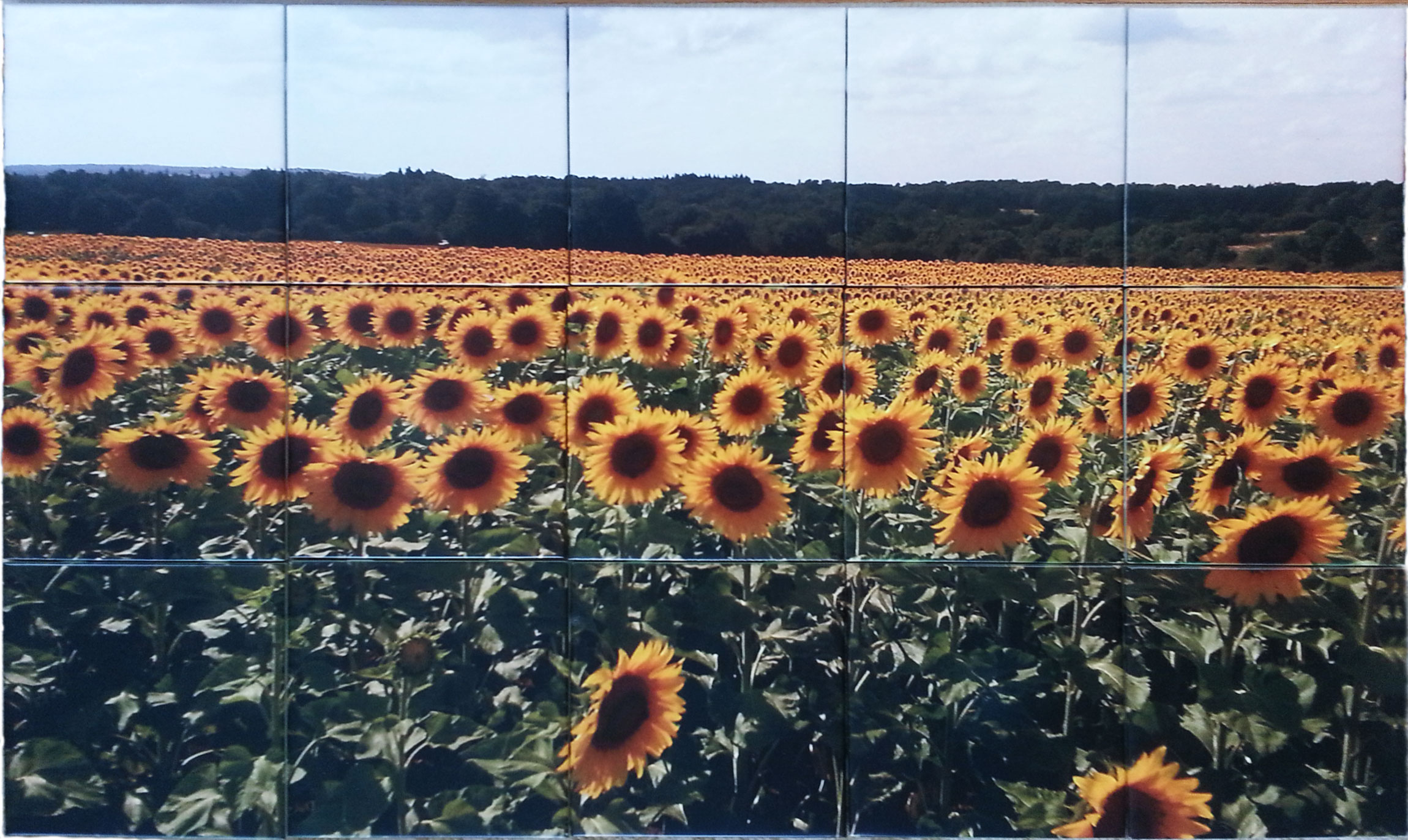 Sunflowers Ceramic Tile Mural