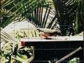 Bird Photo Tile Mural Backsplash