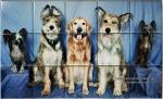 Dog Photo Custom Kitchen Backsplash Tiles