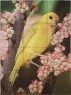 Saffron Finch Outdoor Kiln Fired Tile Mural